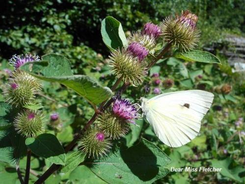 Farfalle (14)