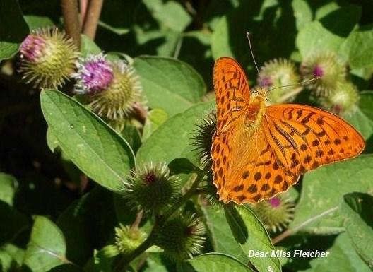 Farfalle (3)