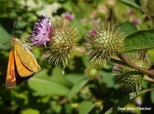 Farfalle (5)