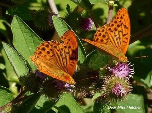 Farfalle (7)