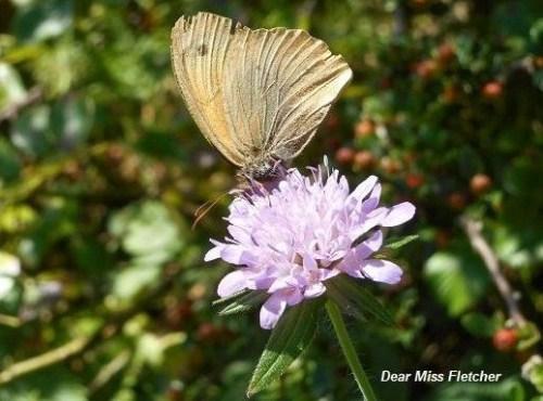 Farfalle (8)