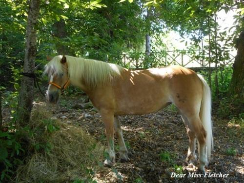 cavalli-2