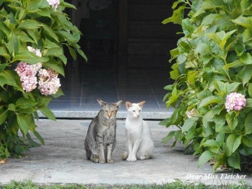 gatti-10