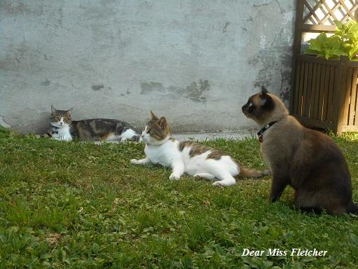 gatti-3