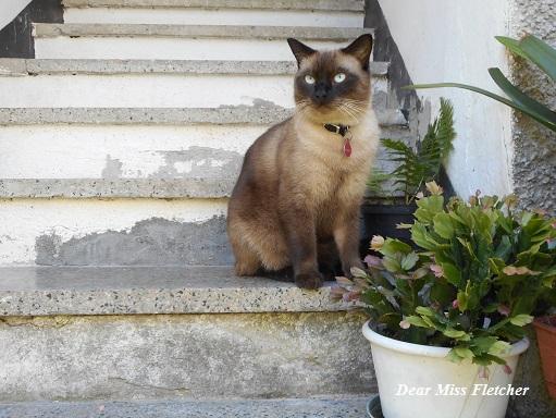 gatti-4