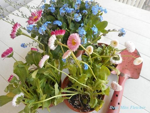 Nuovi fiori sul mio terrazzo | Dear Miss Fletcher