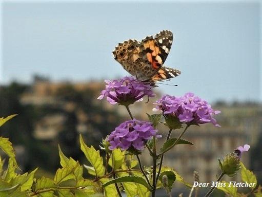 farfalle dear miss fletcher
